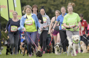 Runners with dogs