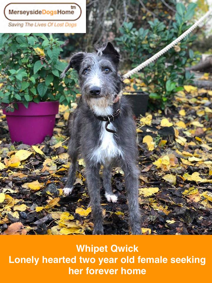 Reserved – Whippet Quick