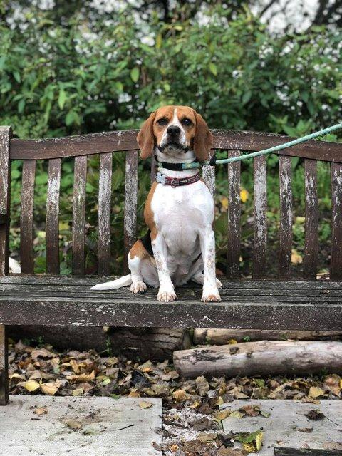 Reserved – Beagle Street