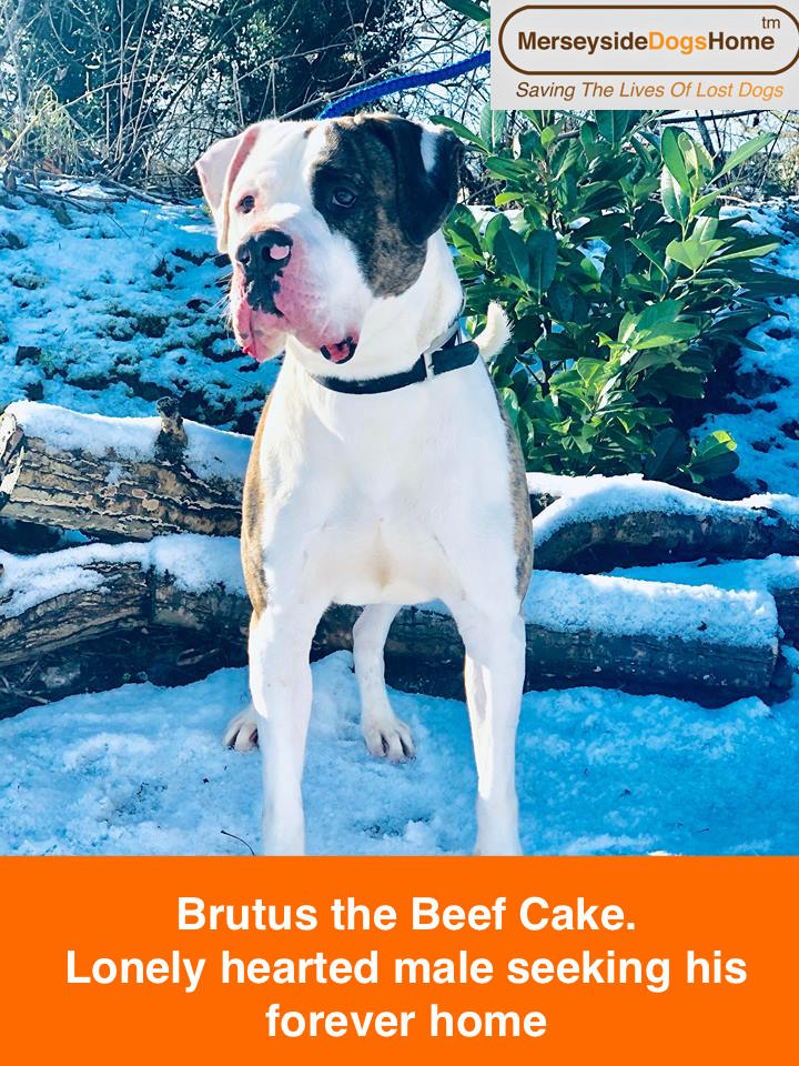Brutus the Beef Cake